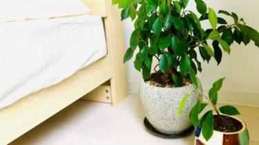 風水で観葉植物を正しく選んで運気をアップさせよう