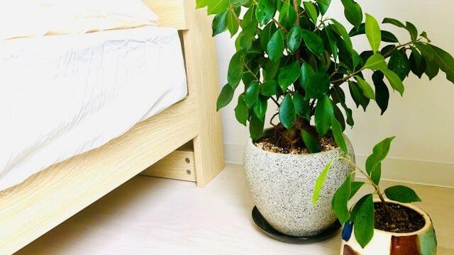 運気アップに効果的な観葉植物のイメージ